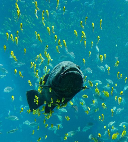 Mwidp saffina desforges for Big pond fish
