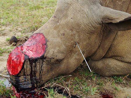 Rhino-horn-trade-2